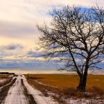 """Lone Tree"" by thorinside"