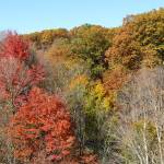 """Hudson River Valley Foliage in Autumn"" by sfg165"