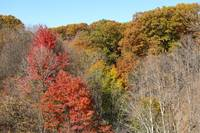 Hudson River Valley Foliage in Autumn