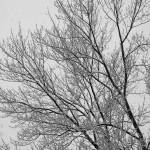 """""""Snow Frosted Tree"""" by foxvox"""