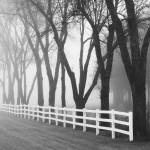 """Foggy Morning: White Fence / Black Trees"" by keithdotson"