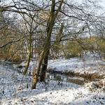 """Snowy Spinney at Brook Hollows (21915-RDA)"" by rodjohnson"