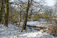 Snowy Spinney at Brook Hollows (21915-RDA)