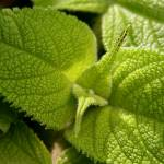 """Leaf close-up"" by anymonkey"