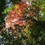 """Autumn Canopy 2"" by NorthPointImages"