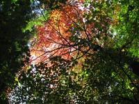Autumn Canopy 2
