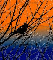 Bird Silhouette in Orange and Blue