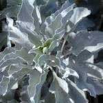 """""""Silver Leaves"""" by ThePictureMonkey"""