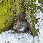 """Grey Squirrel with its Food Store (21933-RDA)"" by rodjohnson"