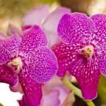 """Madeira Orchids 6"" by JoaoFialho"