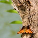 """Butterfly on Tree"" by PrairiePerspectivesPhoto"