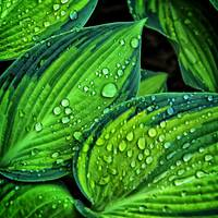Beautiful green leaf with waterdrops