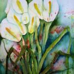 """Calla Lillies"" by ShoshannaBauer"