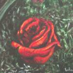 """Portrait of a red rose bud"" by shantharam"