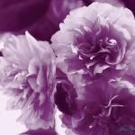 """""""Purple Flowers on a Table"""" by LorrieMorrison"""