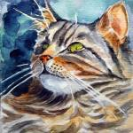 """Maine Coon Cat"" by wally_doodle"
