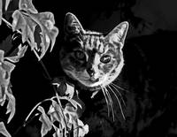 Furtive Feline    Black and White Edit