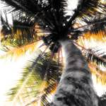 """Under the Coconuts Hand Color"" by Cynthia_Burkhardt"