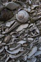 Wall of Shells