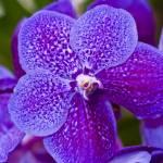 """Madeira Orchids 7"" by JoaoFialho"