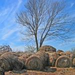 """Unorganized Hay"" by tricia"