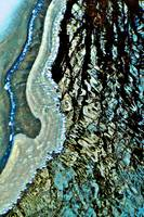 Abstract Water and Ice