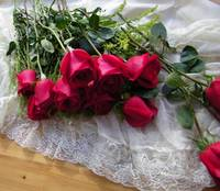 my roses -1