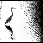 """JP Pond Collage"" by ileneperlman"