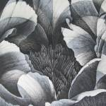 """Peony - black and white study"" by RoNel"