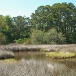 """Florida Coastal Marsh"" by robandcherylesartgallery"