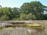 Florida Coastal Marsh