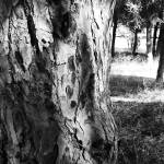 """""""Bark Texture"""" by indiannes"""