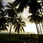"""Haiti, evening light in coconut grove."" by tropicalpix"