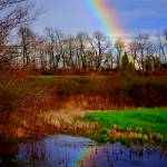 """Reflected Rainbow"" by DonnaHarding"