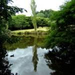 """""""Taitua Arbortorium"""" by catlova"""