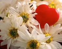 daisies and red heart