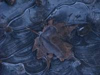 Ice Leaf Abstract 5414