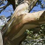 """Snow Gum"" by Colin_Ewington"