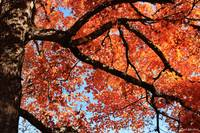 Autumn: Lost Maples 4