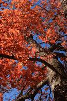 Autumn: Lost Maples 5