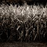 """The Cornfield Revisited"" by lensnation"
