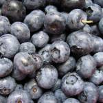 """Blueberries for Sale"" by lensnation"