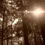 """""""thelight"""" by RLMCreatives"""