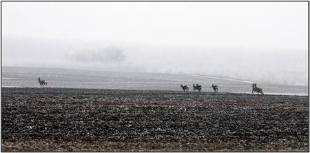 Deers and the fog