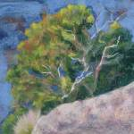 """Canyon Tree"" by LynnMorgan"