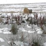 """Wheat field - with hay roll, snow, ice ....."" by IrenicRhonda"