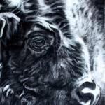 """Bison charcoal"" by giftportraits"