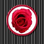 """Red Rose Stripes"" by floatinglemons"