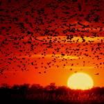 """Blackbird Sunset"" by jerrysfoto"