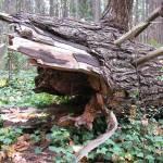 """Broken Tree"" by MartinAqua"